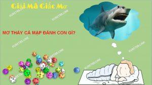 Mơ thấy cá mập đa phần mọi người sẽ cảm thấy sợ hãi